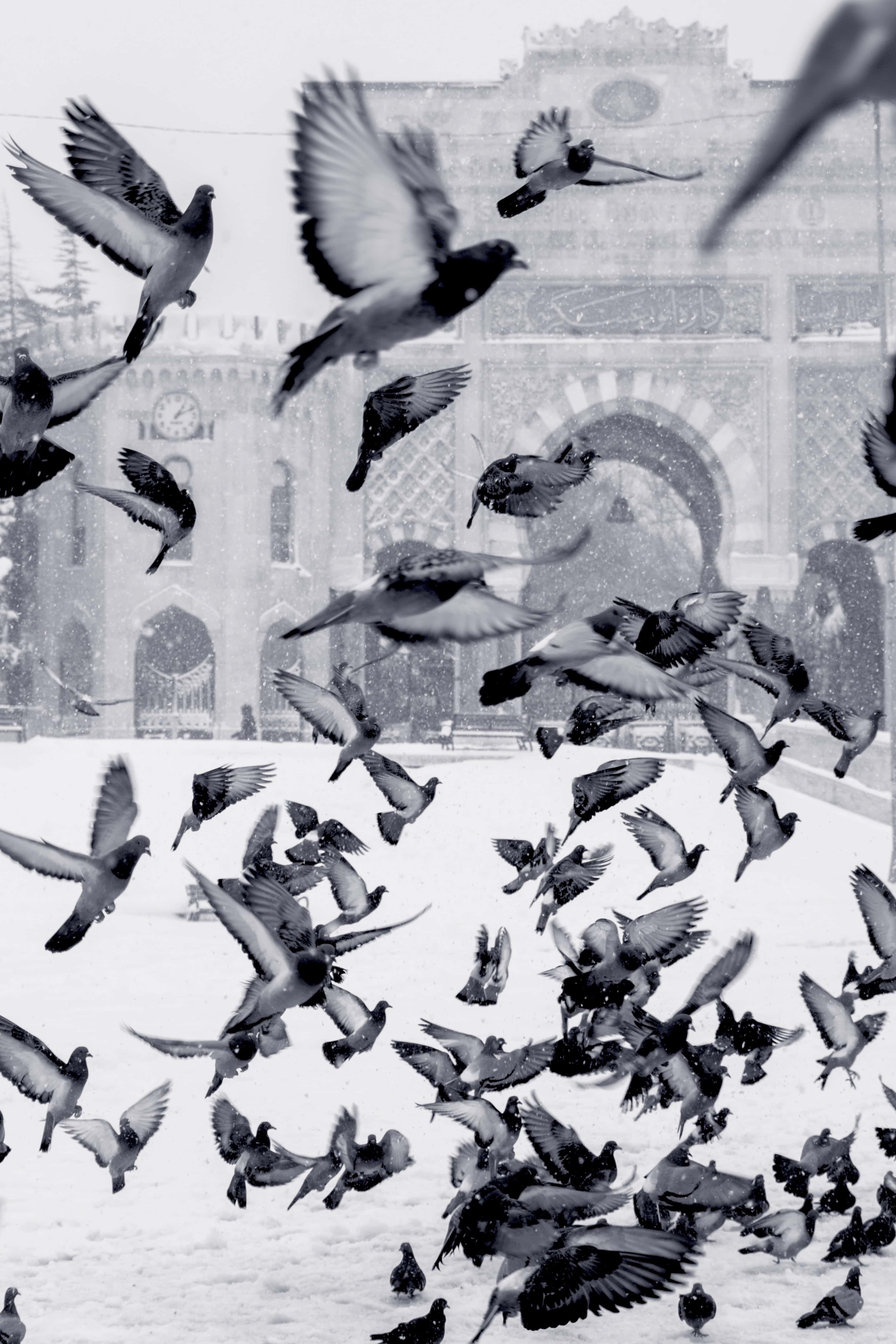 Filmmaking Trends in 2020 - An Image of Birds in Black and White